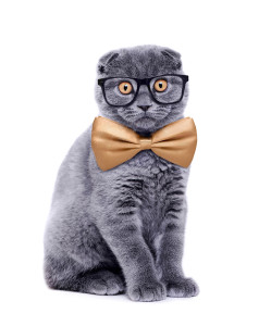 Grey Cat with Glasses
