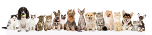 dogs&cats - horizontal