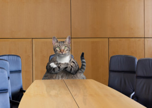 cat at Board Meeting