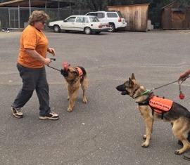 SAR Dogs